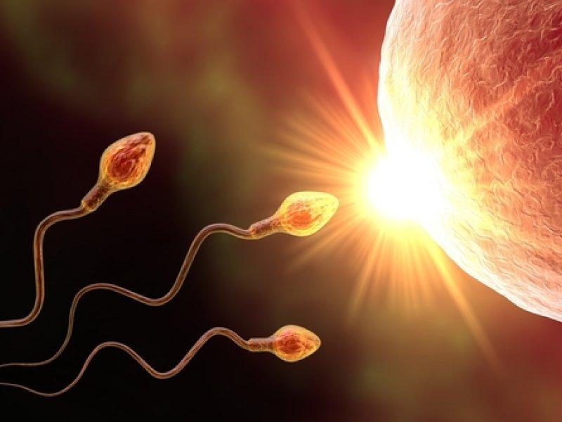 Яйцеклетки из клеток кожи